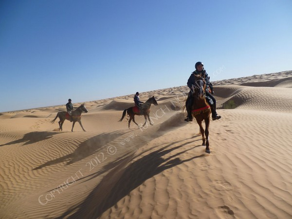 Tunisie : le paradis de l'équitation