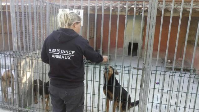 pour une meilleure vie pour les animaux en Tunisie